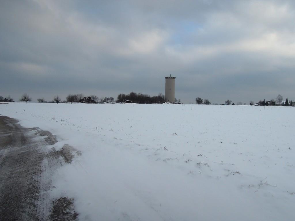 Goldgelb-Acker im winterlichen Weiß Februar 2015!