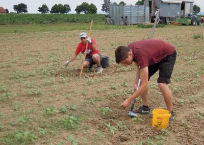 12. Juni – Erste Ausgrasaktion auf dem Acker