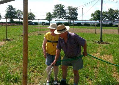 3. Juni – Feuerbohnen und Winden werden eingepflanzt