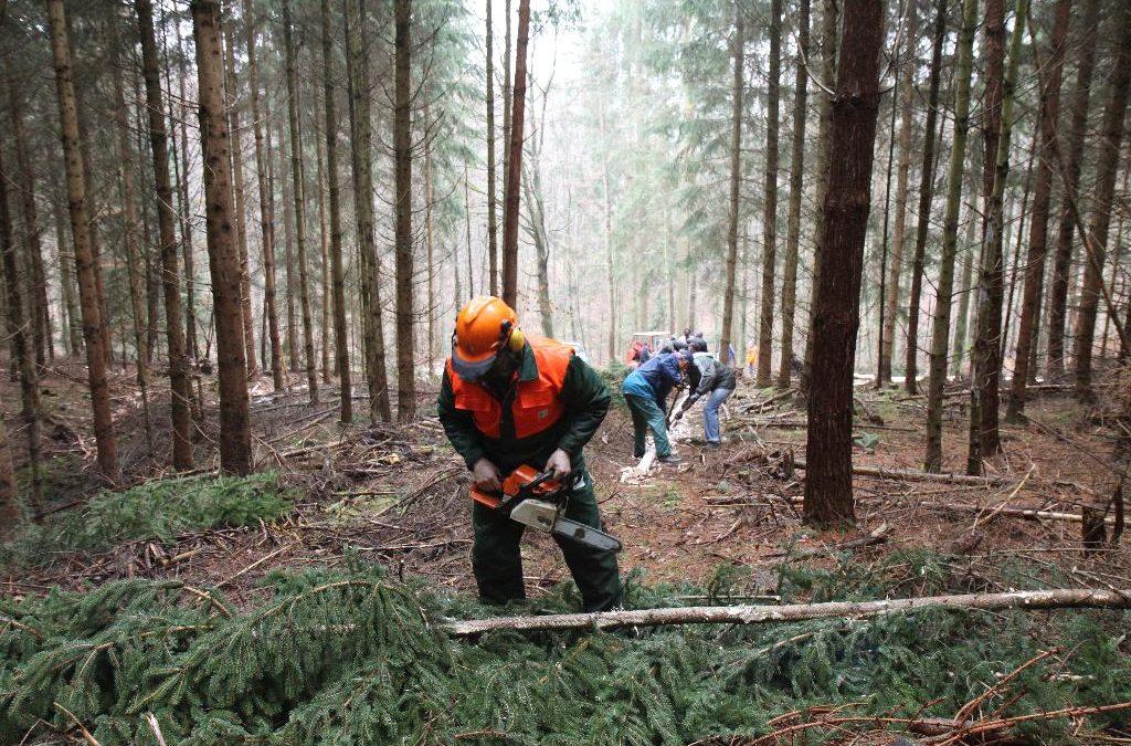 2011 Entstehung  – Holzsägeaktion Eisstand